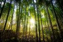 WWF-Türkiye 42 binden fazla ağacın kesilmesini önledi