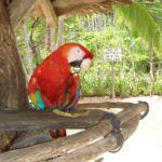 Kosta Rika'da yeşil huzur