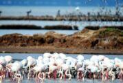 Flamingo cennetini çöl haline getirecek proje